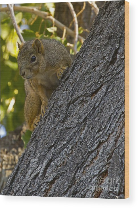 Squirrel Wood Print featuring the photograph Red Squirrel  #1736 by J L Woody Wooden