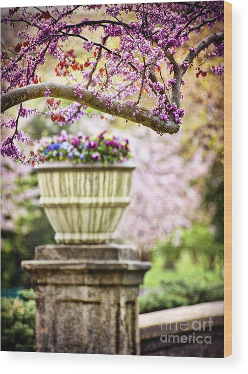 Spring Wood Print featuring the photograph Fresh As Springtime by Cheryl Davis