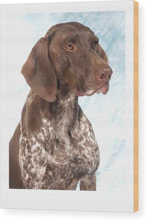 German Shorthaired Pointer Digital Art Wood Print featuring the digital art German Shorthaired Pointer 960 by Larry Matthews