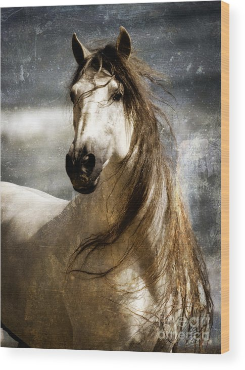 Equine Art Wood Print featuring the photograph Liberty by Patty Hallman