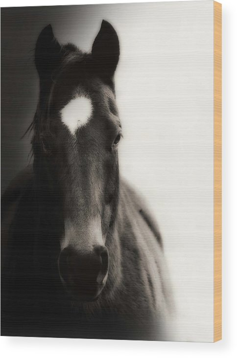 Horse Wood Print featuring the photograph In The Shadows by Megan Chambers