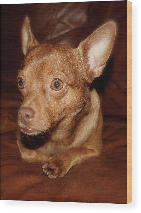 Dog Wood Print featuring the photograph Brownie Bear by Paula Deutz