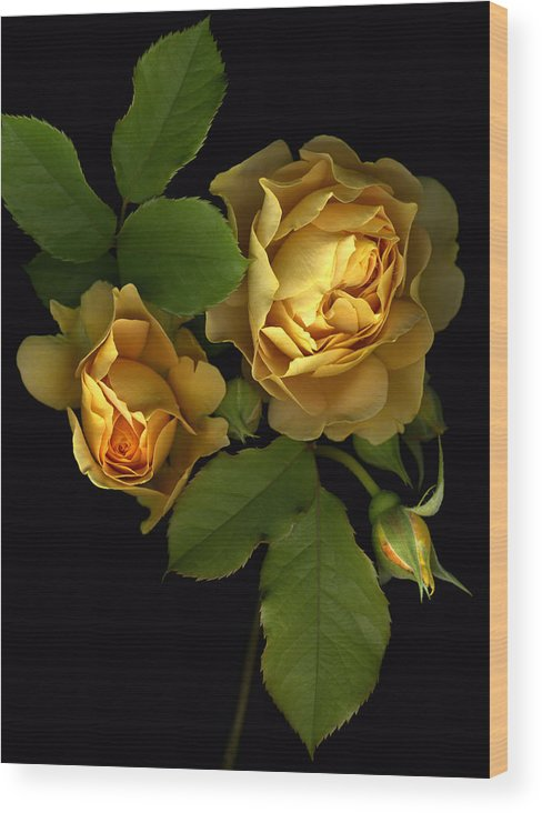 Roses Wood Print featuring the photograph Forever Yellow Roses by Deborah J Humphries