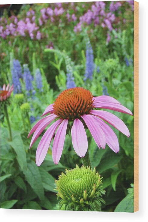 Nature Wood Print featuring the photograph Garden Walk by Dave Alexander