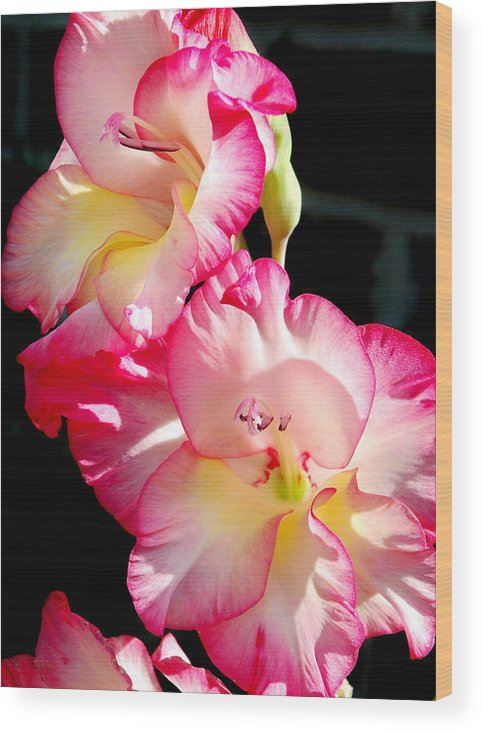 Flower Wood Print featuring the photograph Gladiolas by Tony Ramos