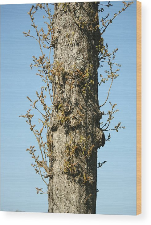 Tree Wood Print featuring the photograph Growing In All Directions by Magda Levin-Gutierrez