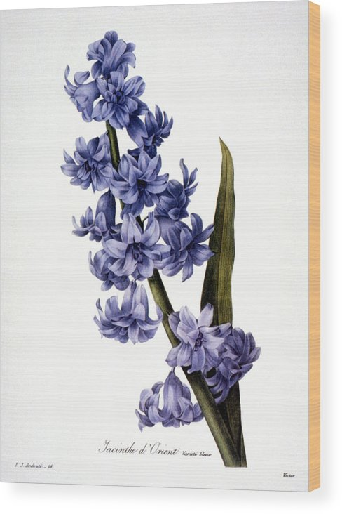1833 Wood Print featuring the photograph Hyacinth by Granger