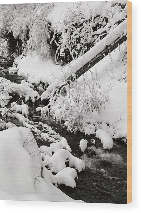 Mill Creek Wood Print featuring the photograph Mill Creek Canyon In Winter by Dennis Hammer
