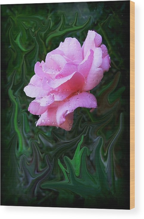 Rose Wood Print featuring the photograph Pink Rose by Jim Darnall