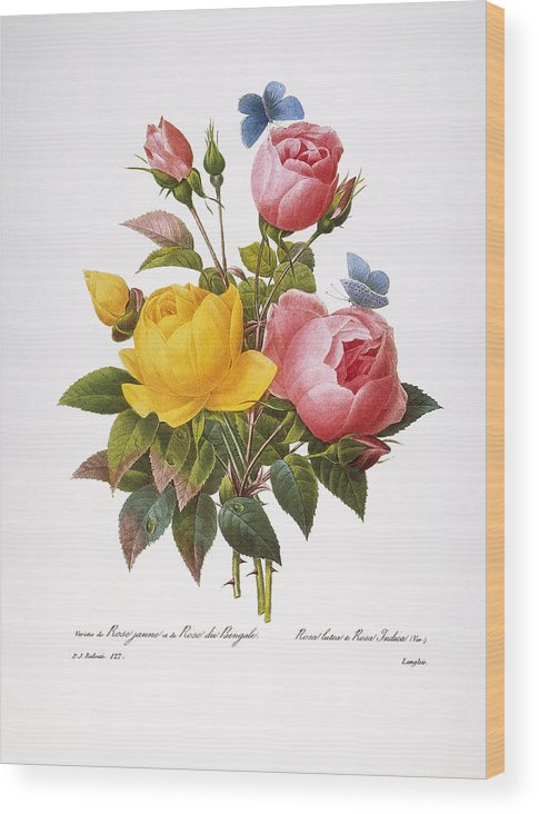 1833 Wood Print featuring the photograph Redoute: Roses, 1833 by Granger