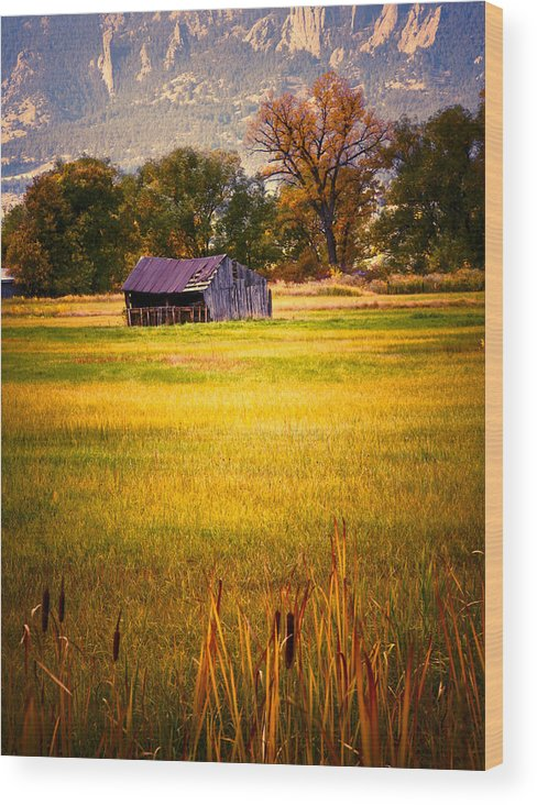 Shed Wood Print featuring the photograph Shed In Sunlight by Marilyn Hunt
