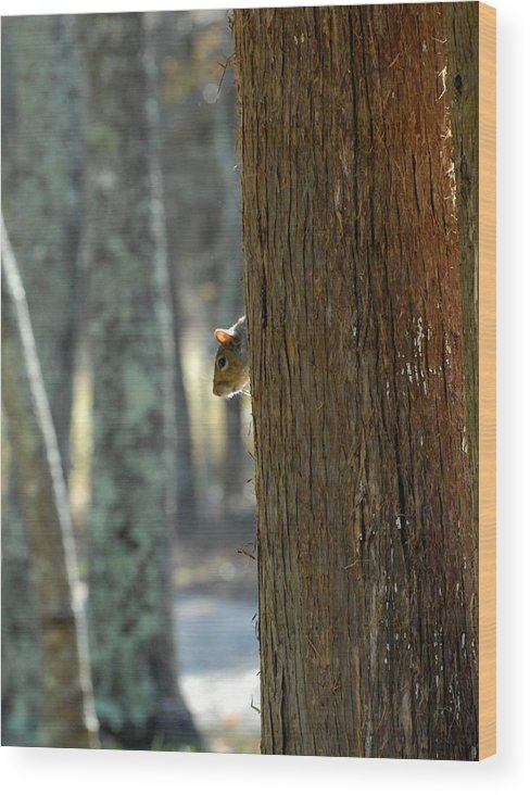 Squirrel Photographs Wood Print featuring the photograph Squirrel 4 by Joyce StJames