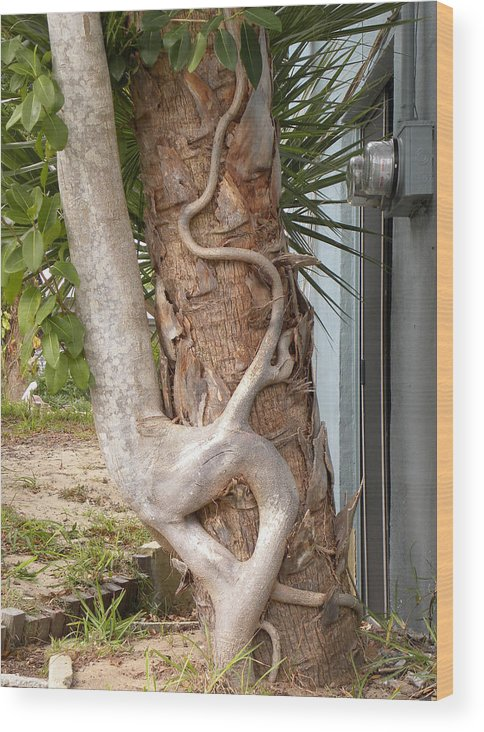 Tree Hugging Wood Print featuring the photograph Tree Hugger by Riccardo Alone