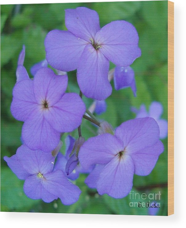 Flowers Wood Print featuring the photograph Purple Passion by Sara Raber