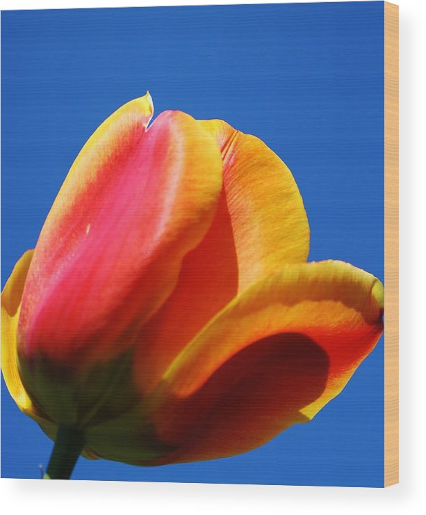 Flora Wood Print featuring the photograph Taking In The Sun by Bruce Bley