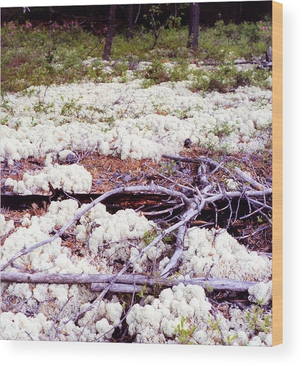 Boreal Foest Wood Print featuring the digital art Moss And Dead Branches 2 Ae2 by Lyle Crump