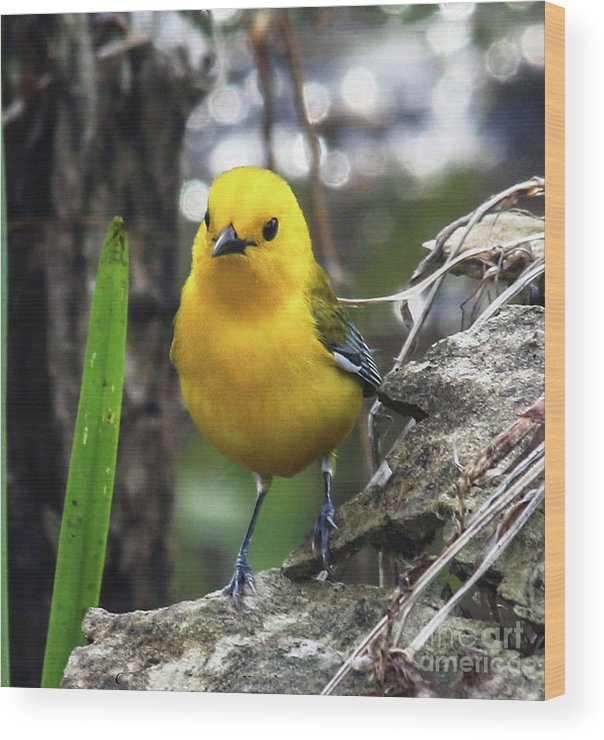 Yellow Wood Print featuring the photograph Prothonotary Warbler by Jo Anne Keasler