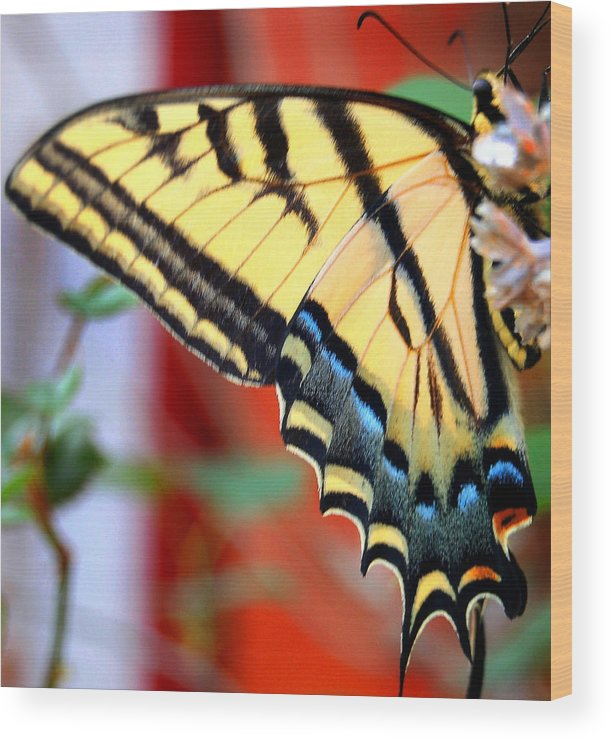 Photography Wood Print featuring the photograph Swallowtail Wing by Heather S Huston