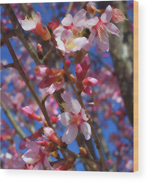 Spring Wood Print featuring the mixed media Wild Cherry Tree In Bloom by Garland Johnson