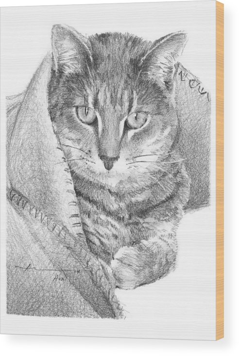 <a Href=http://miketheuer.com Target =_blank>www.miketheuer.com</a> Cat In A Blanket Pencil Portrait Wood Print featuring the drawing Cat In A Blanket Pencil Portrait by Mike Theuer