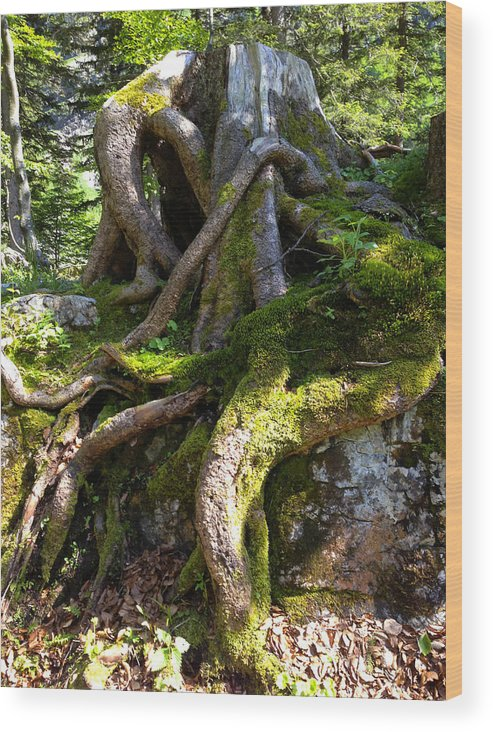 Knarly Wood Print featuring the photograph Knarly Old Tree Stump Switzerland by PIXELS XPOSED Ralph A Ledergerber Photography
