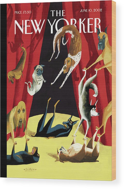 Animals Dogs Entertainment Circus Tricks Stunts Breeds Curtains Stage Dog Canine Acrobat Acrobatics Mark Ulriksen Mul Mul Artkey 51570 Wood Print featuring the painting New Yorker June 10th, 2002 by Mark Ulriksen