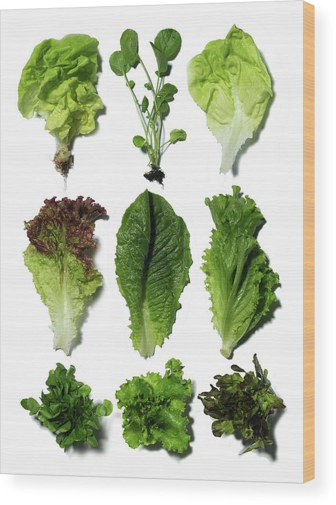 Nine Different Types Of Lettuce Wood Print By Jonathan Kantor