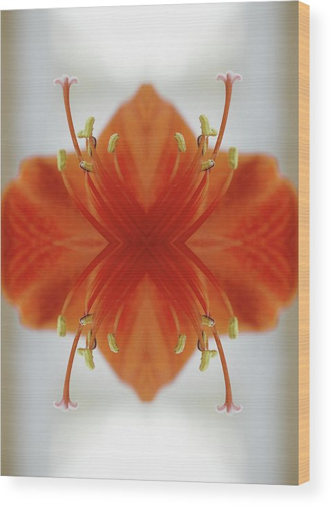 Tranquility Wood Print featuring the photograph Red Amaryllis Flower by Silvia Otte