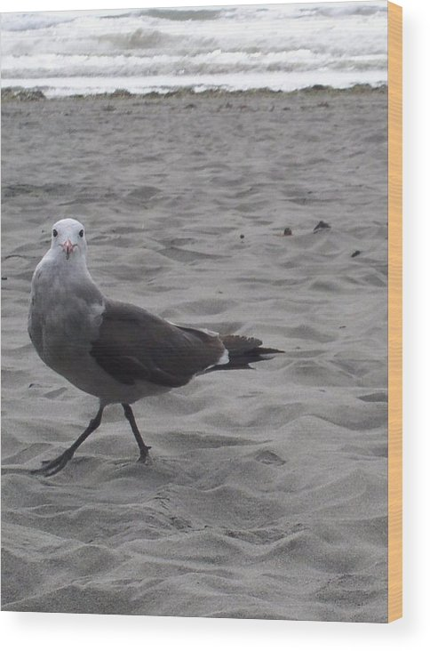 Seagull Wood Print featuring the photograph What are you looking at by Valerie Josi