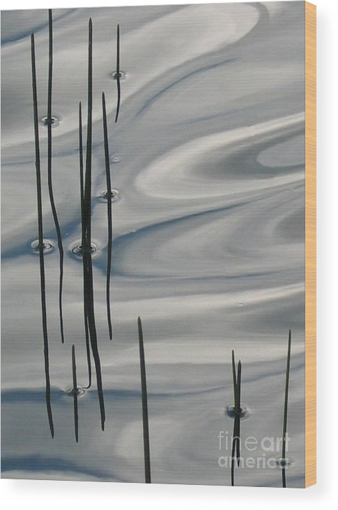 Swirling Wood Print featuring the photograph Mesmerized by Idaho Scenic Images Linda Lantzy