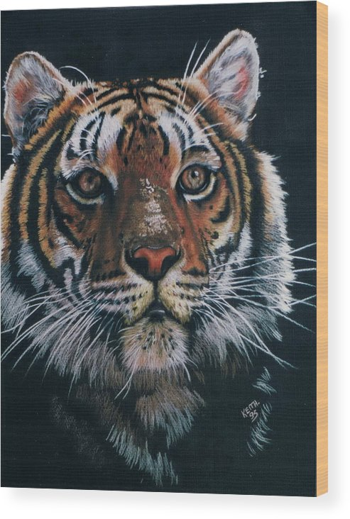 Tiger Wood Print featuring the drawing Backlit Tiger by Barbara Keith