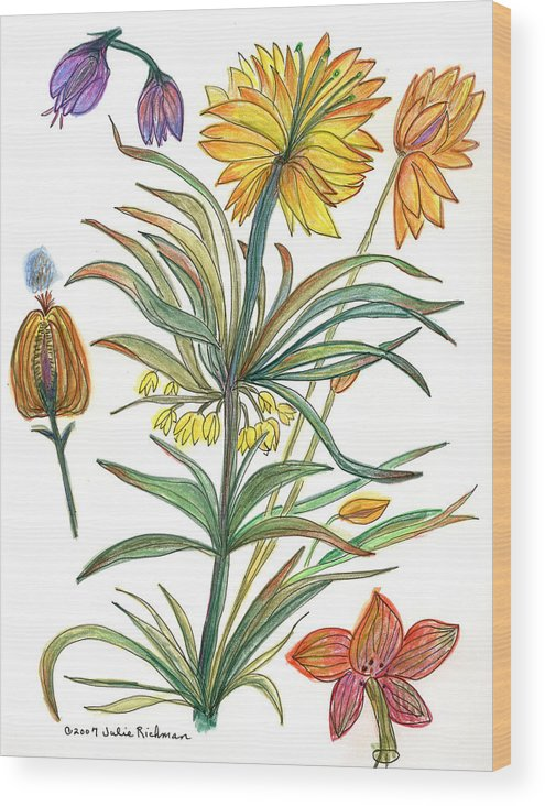 Flowers Nature Botany Watercolor Yellow Drawing Julie Richman Flora Pencil Wood Print featuring the painting Botanical Flower-53 yellow flower by Julie Richman