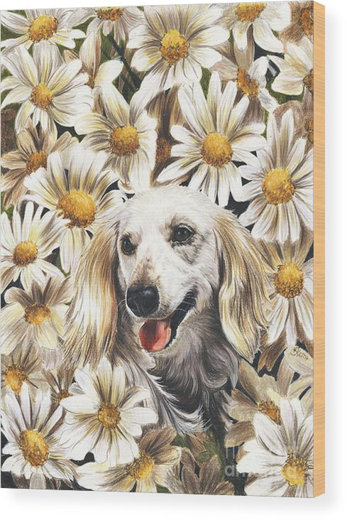 Dachshund Wood Print featuring the drawing Camoflaged by Barbara Keith