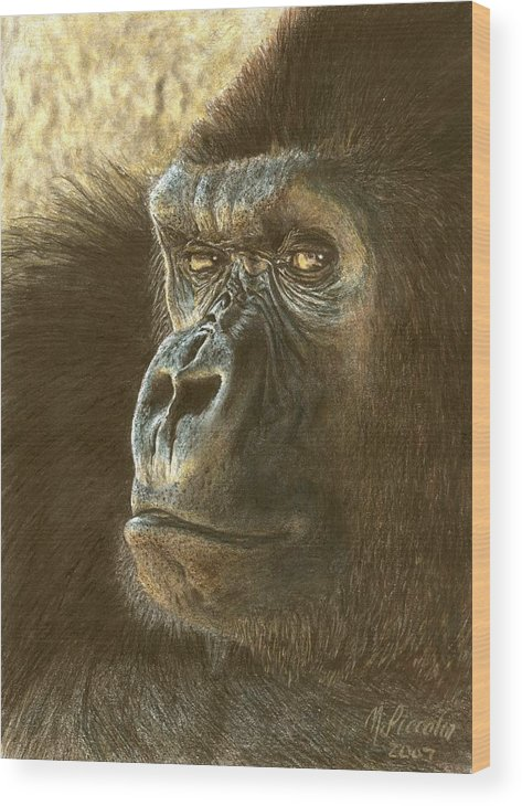 Gorilla Wood Print featuring the drawing Gorilla by Marlene Piccolin