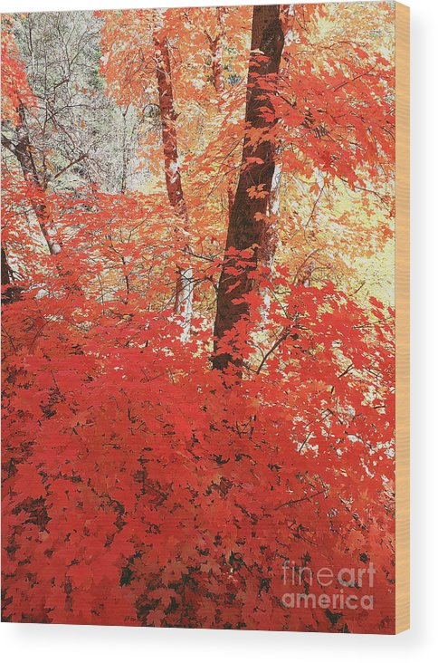 Place Wood Print featuring the photograph Maple Red by Dennis Hammer