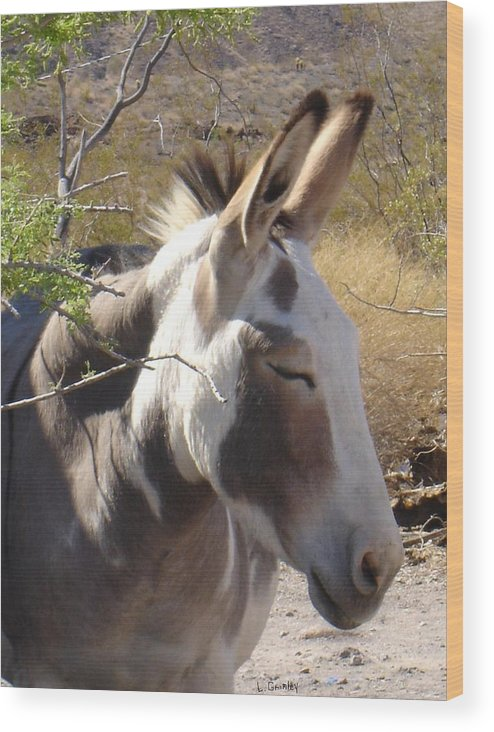 Photography Wood Print featuring the photograph Oatman Burro by Lessandra Grimley