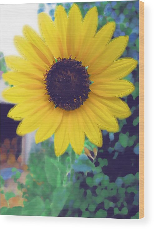 Sun Flower Wood Print featuring the photograph The Sunflower by Chuck Shafer