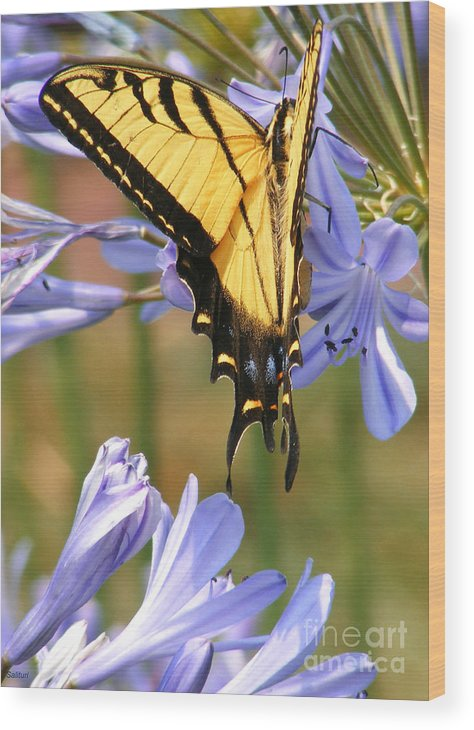 Butterfly Wood Print featuring the photograph Touching Lilly by Gail Salitui