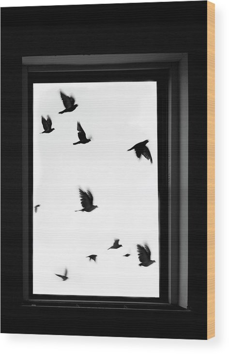 Spooky Wood Print featuring the photograph Flock Of Crows Seen Through A Window by Grant Faint