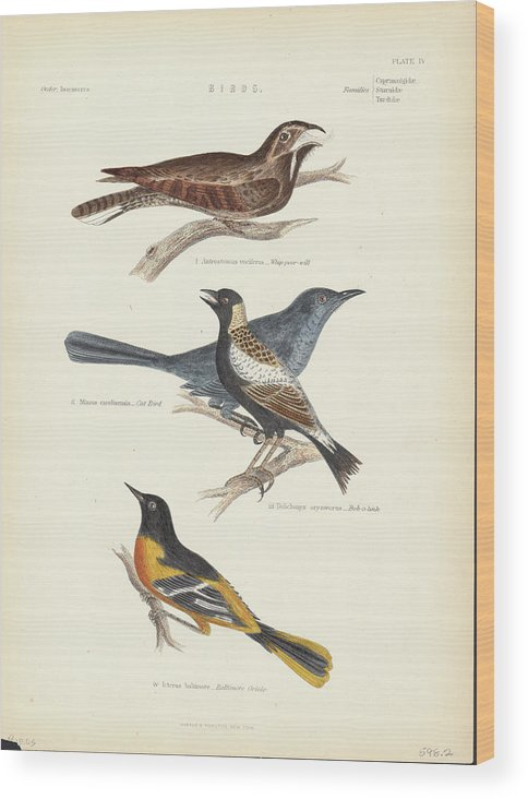 Music Wood Print featuring the photograph Order Passeriformes by Kean Collection
