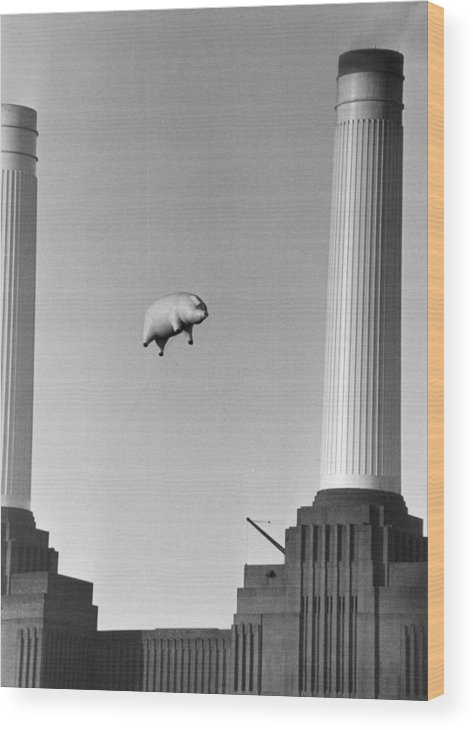 Pig Wood Print featuring the photograph Pink Floyds Pig by Keystone
