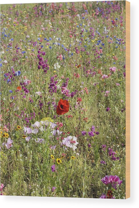 Outdoors Wood Print featuring the photograph Mixed colourful wildflowers by Lyn Holly Coorg