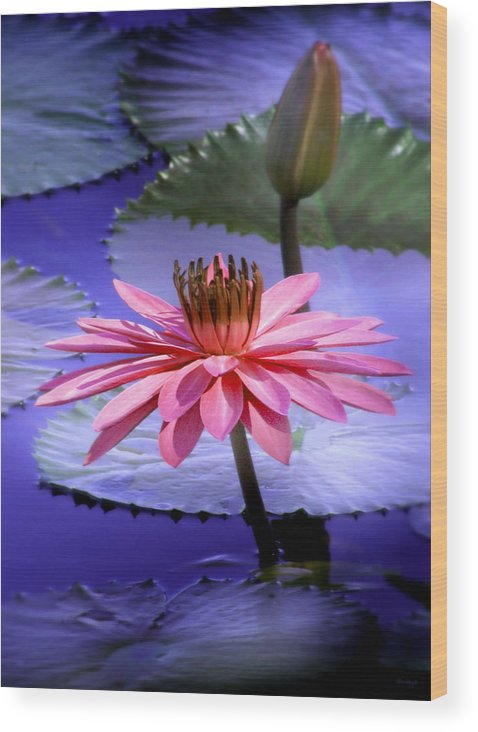 Floral Wood Print featuring the photograph And the Day Came.... by Holly Kempe