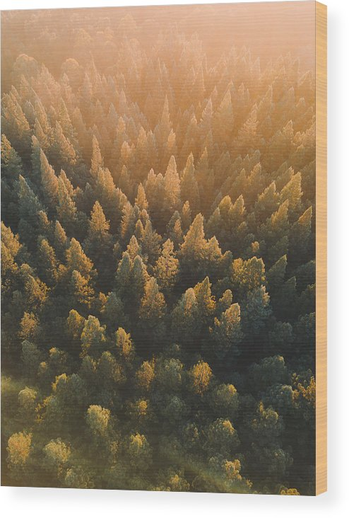 Tranquility Wood Print featuring the photograph High Angle View Of Trees In Forest by Connor Vaughan / EyeEm