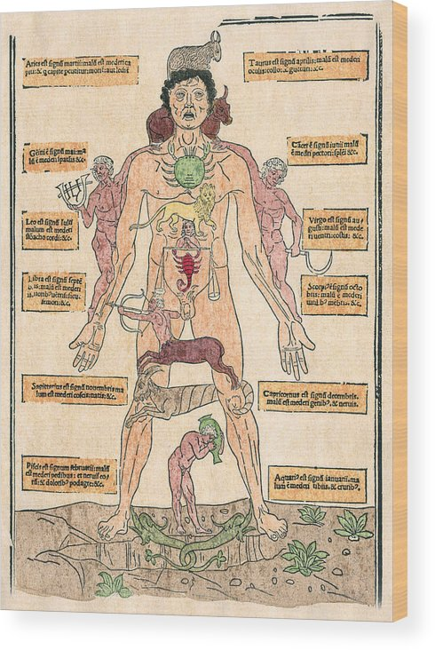 1493 Wood Print featuring the photograph Bloodletting Chart, 1493 by Granger