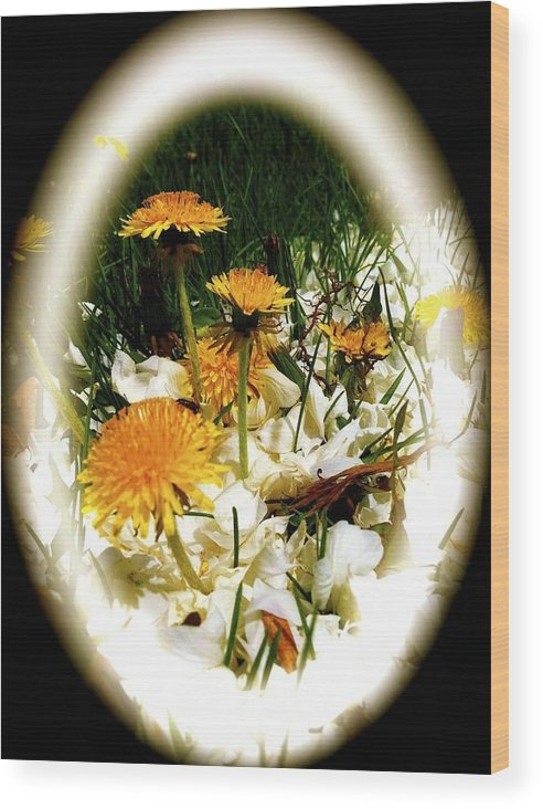 Flower Wood Print featuring the photograph Dandelion Time by William Hallett