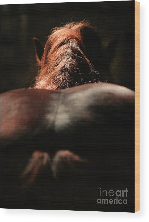 Horse Wood Print featuring the photograph From The Back by Angel Ciesniarska