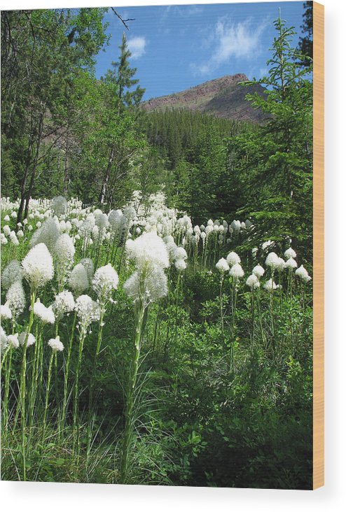 Xerophyllum Tenax Wood Print featuring the photograph Red Mountain Beargrass by Pam Little