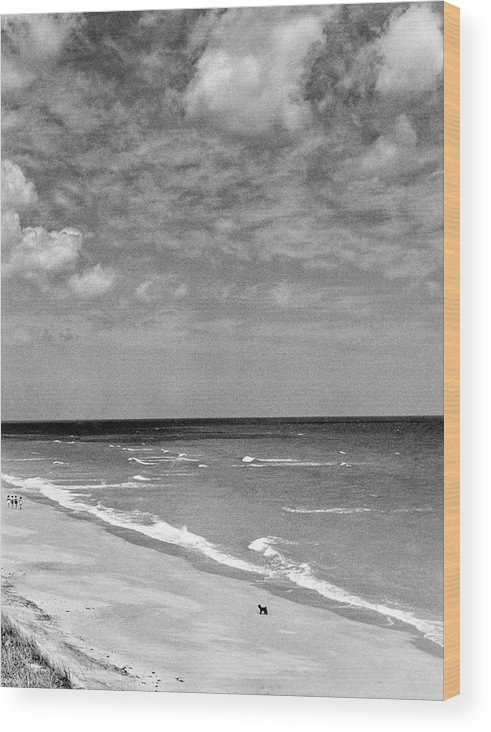 Hobe Sound Wood Print featuring the photograph The Beach At Hobe Island by Serge Balkin