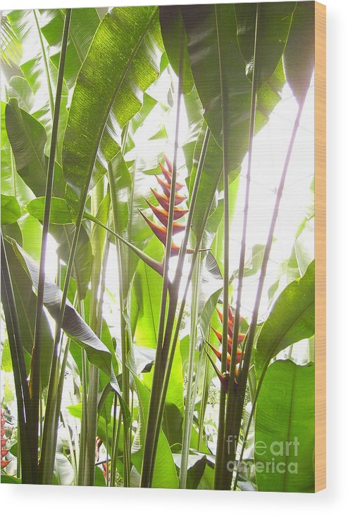 Plants Wood Print featuring the photograph Tropical2 by Heather Morris